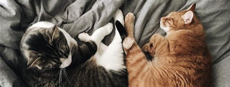 Houzzの「猫の日」大特集!